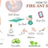 Natural Ways To Treat A Fire Ant Sting