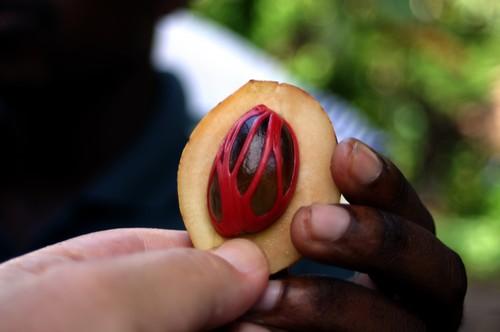 Nutmeg benefits (nutmeg fruit with seed and mace)