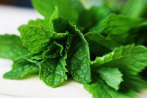 Field mint pudina benefits