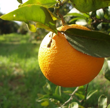 Orange for health
