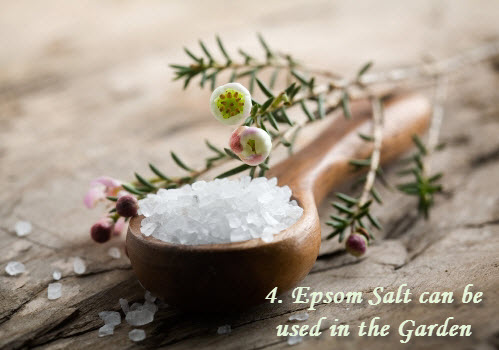 Epsom Salt can be used in garden