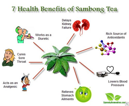 Sambong tea benefits
