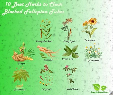 Herbs for blocked fallopian tubes