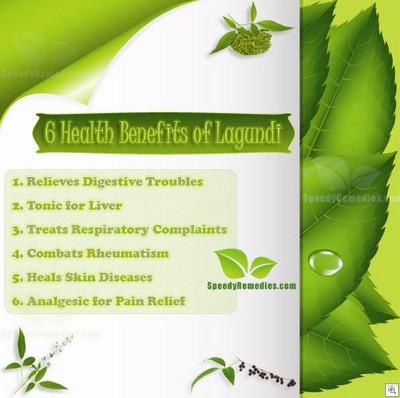 6 health benefits of lagundi